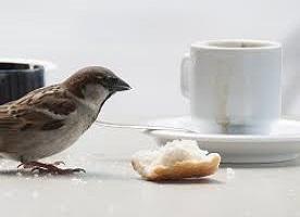 Mangime per uccelli liberi