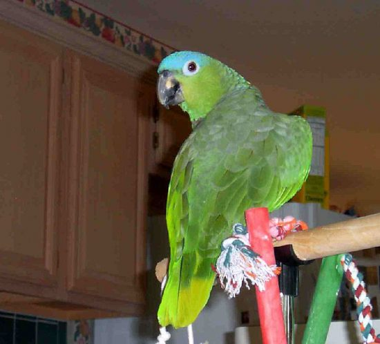 Trespoli per pappagalli