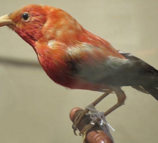 Zampe uccelli