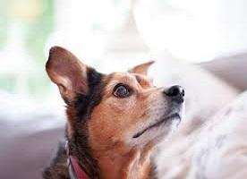 Sali minerali per cani
