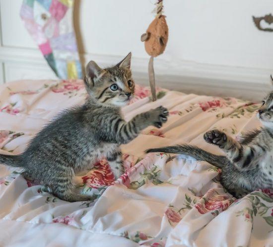 Giochi gatto
