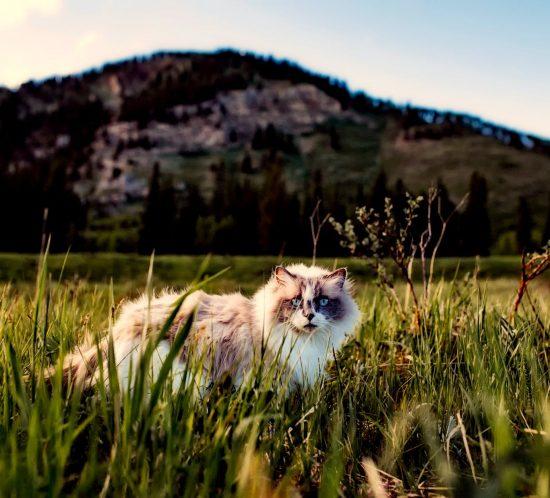 Cosa cerca il gatto fuori casa