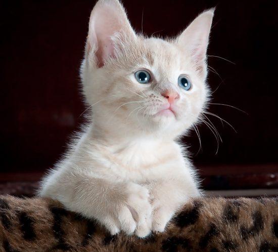 Gatto necessita di cure particolari