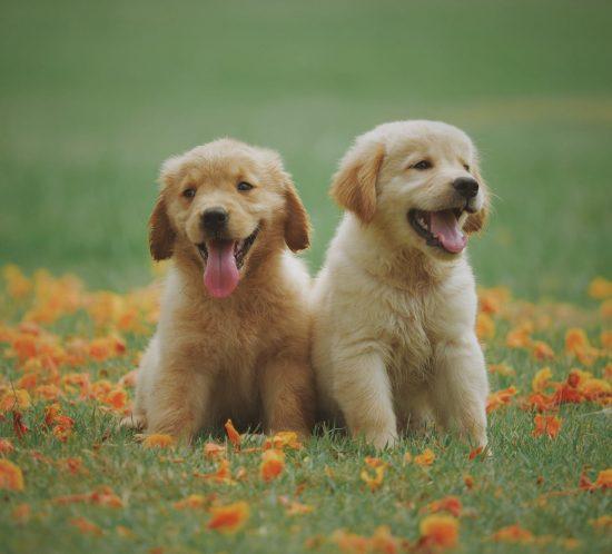 Quale razza di cani preferiscono i bambini