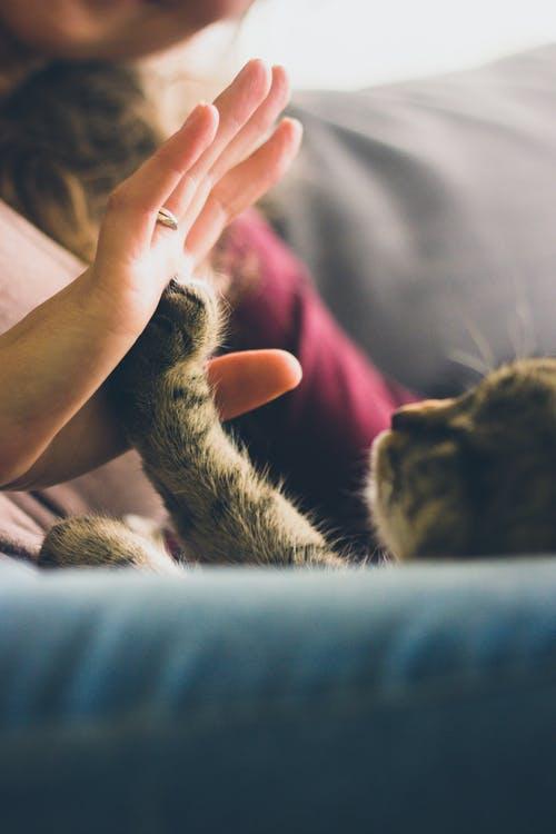 Segnali affetto gatto