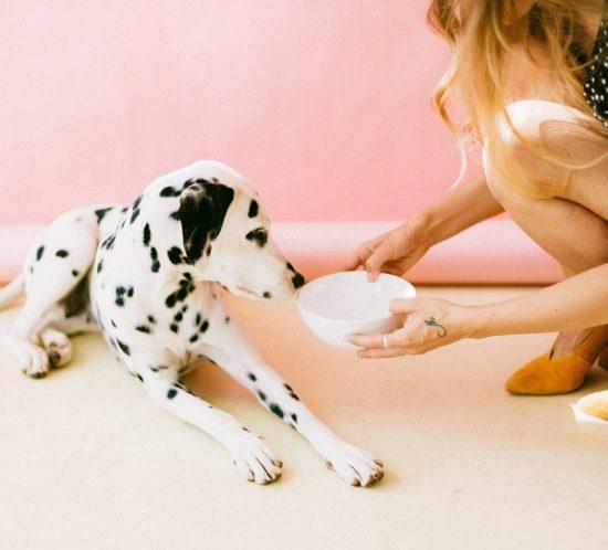 Alimenti ideali per cani sportivi