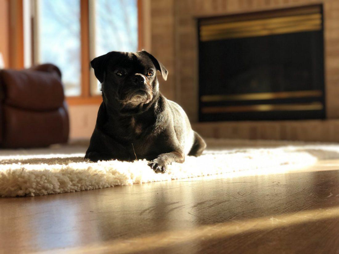 Come abituare un cane a stare da solo in casa