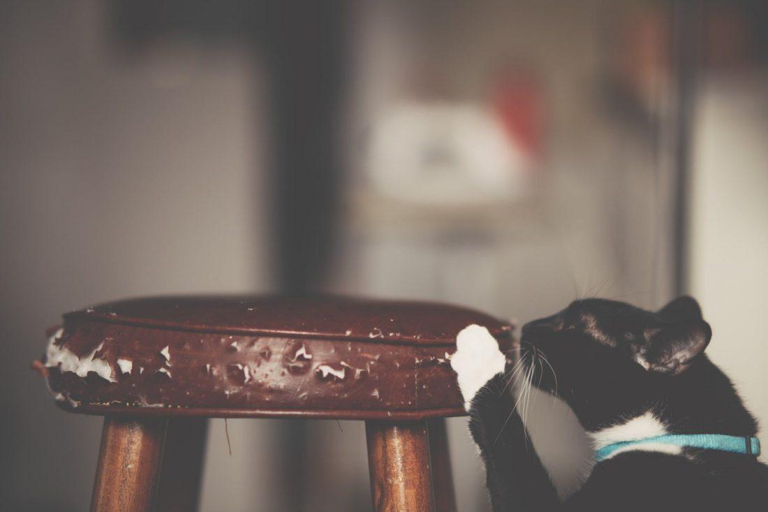 Perché il gatto si lima le unghie in casa