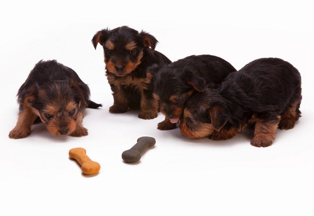 Abituare il cane a nuovi alimenti