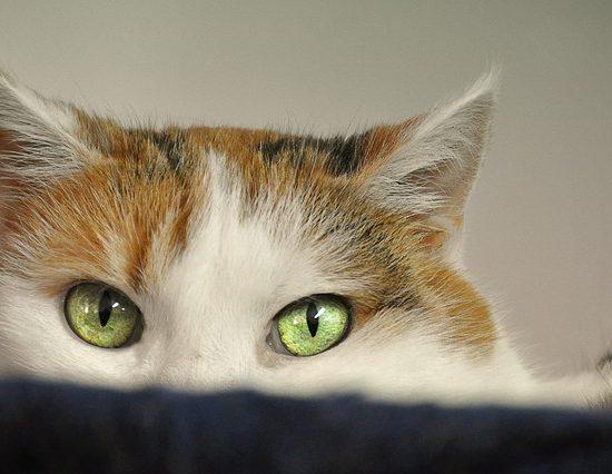 Anche i gatti hanno paura dei botti a capodanno