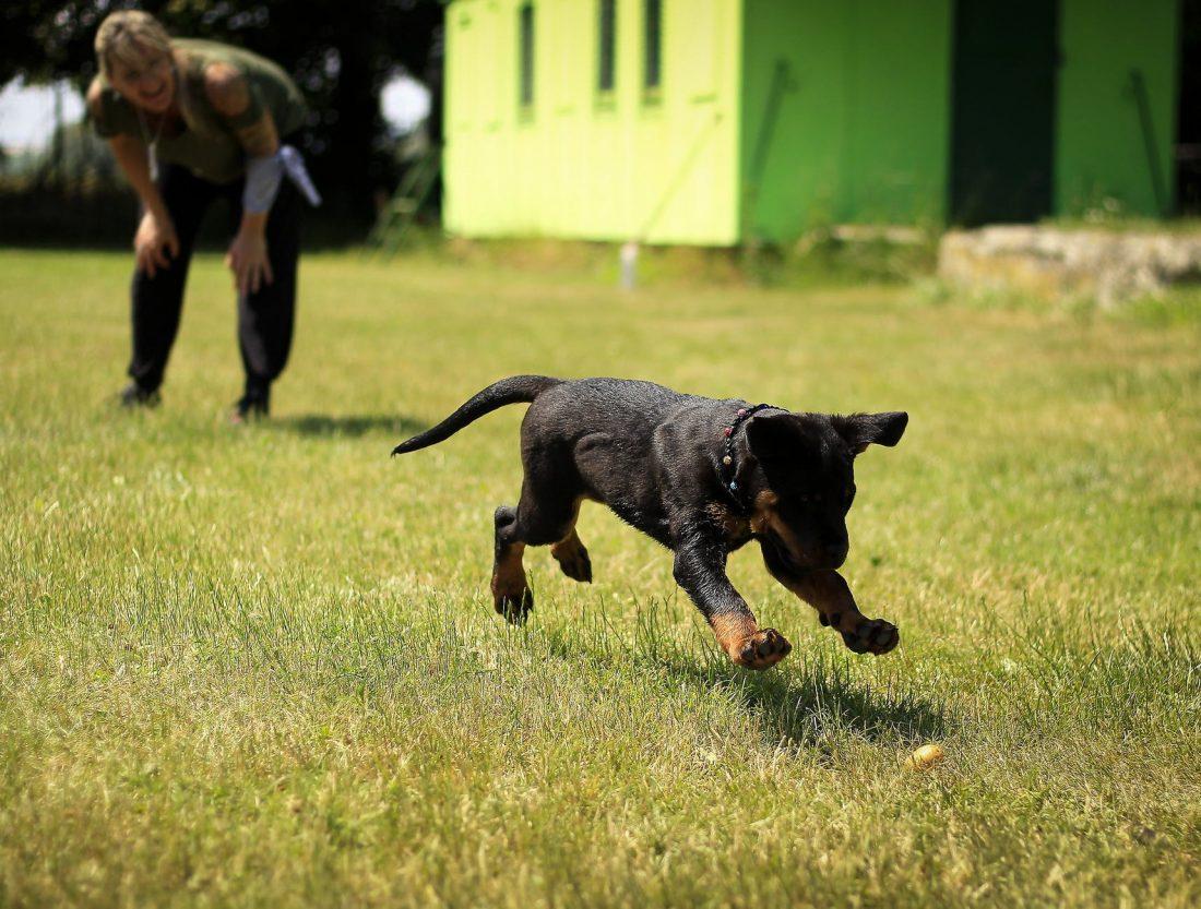 Come addestrare un cane in modo corretto