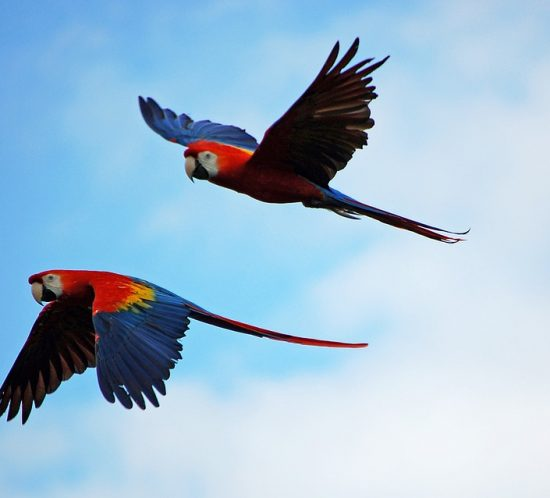 Come addomesticare un pappagallo