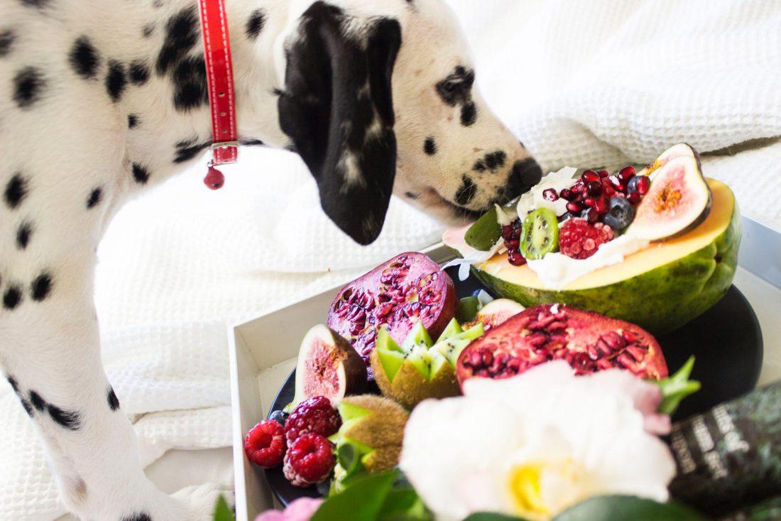 Come far dimagrire i nostri animali domestici