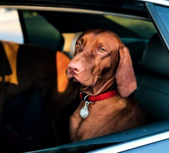 Come trasportare il cane in macchina in tutta sicurezza