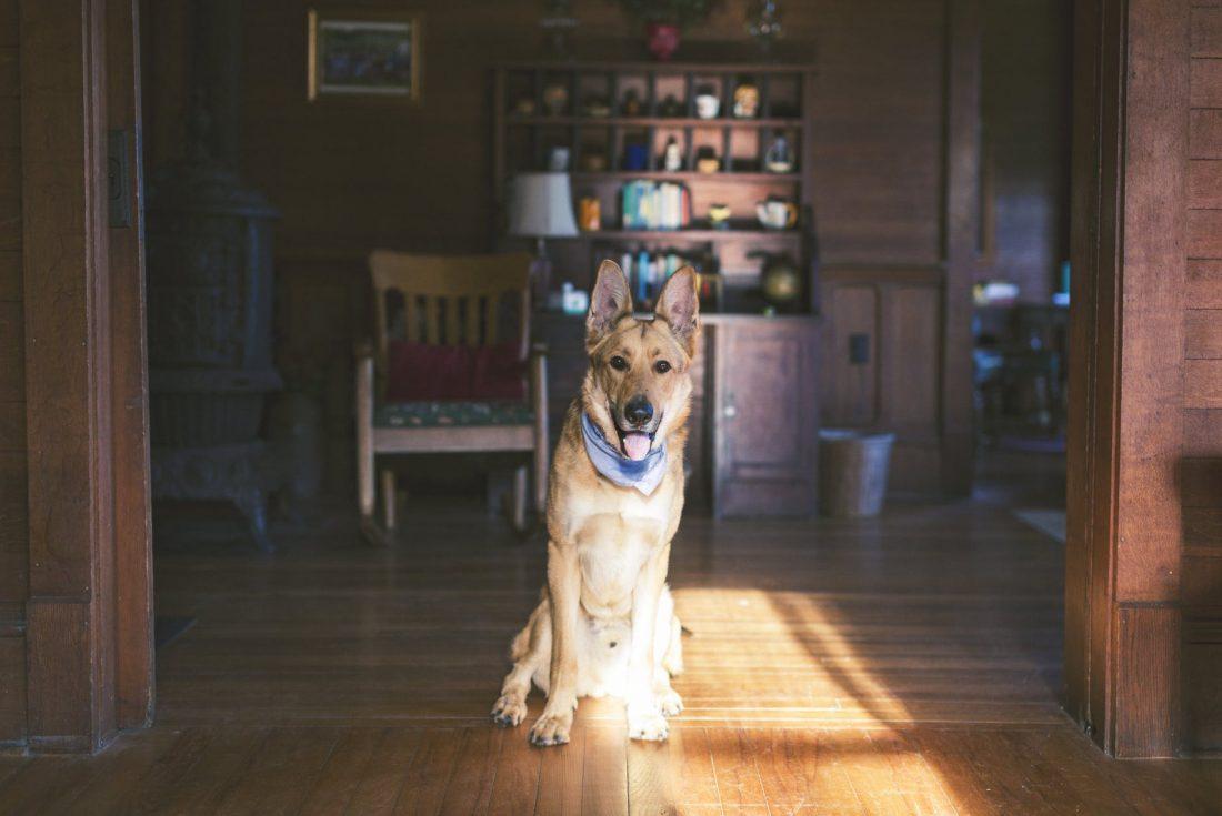 I cani soffrono in appartamento