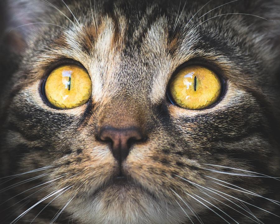 L'utilità dei baffi per il nostro gatto