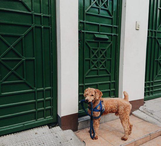 Quali cani scegliere per chi vive in appartamento