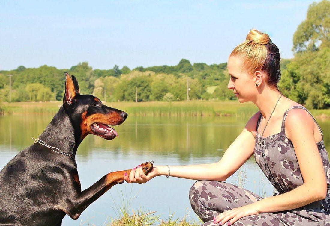 Proteggere le zampe del nostro cane d'estate